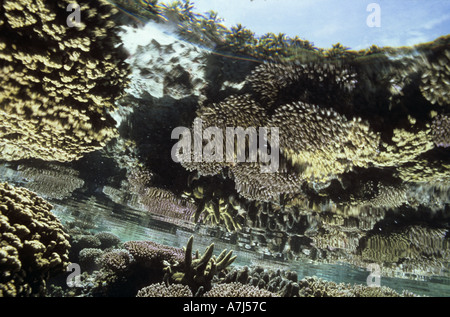 Reef reflection corals - Stock Image