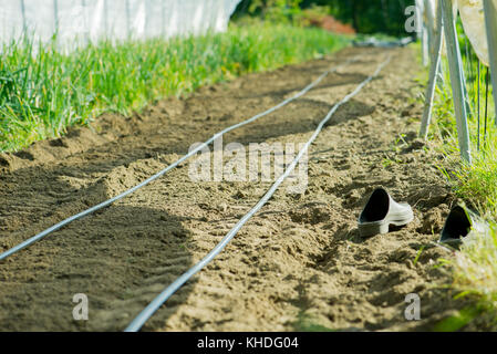 Irrigation hoses in garden - Stock Image