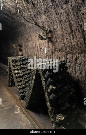 Underground tunnel with aging wine bottles and sparkling wine covered in dust and mold - Stock Image