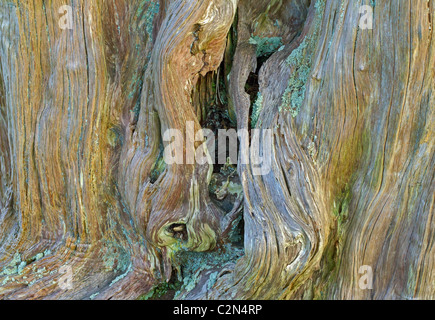 Tree Textures at Bardsea - Stock Image