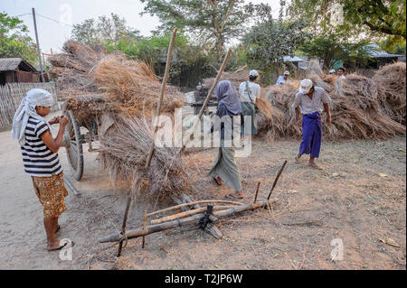 Rural farmers loading an ox cart with bundles of peanut plant straw in Bagan Myanmar (Burma) - Stock Image