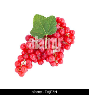 Fresh red currants isolated on white background, fruits - Stock Image