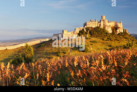 Ruin of Spissky Castle in Slovakia at sunrise - Stock Image