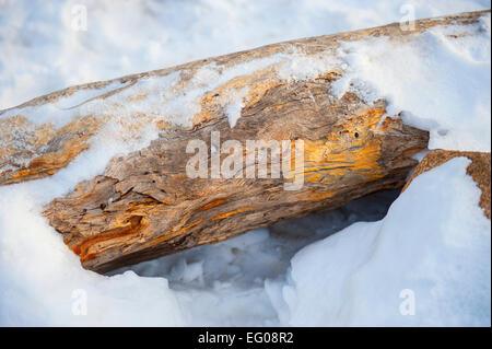 Snow, Log of Wood winter - Stock Image