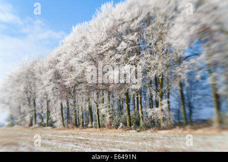 Woodland covered in snow and frost, Gloucestershire, UK - Stock Image