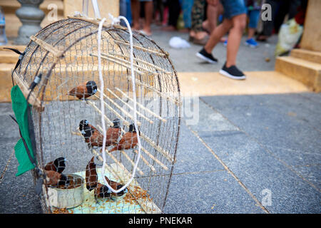 Small birds are kept in cages near shrines in Phnom Penh, Cambodia. The birds are captured and sold to the faithful in order to be released in a ritua - Stock Image