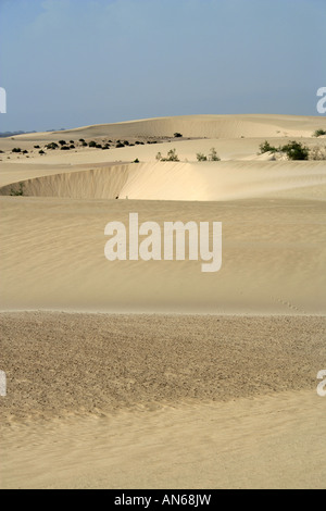Sand Dunes. Corralejo National Park, Fuerteventura, Canary Islands, Spain, Europe - Stock Image
