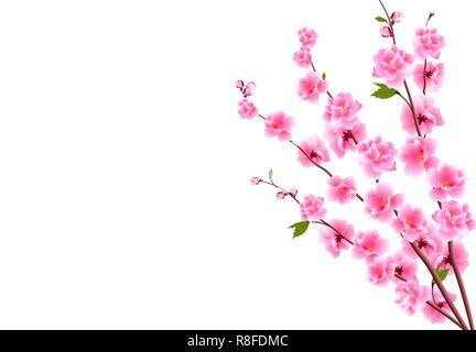 Sakura. Decorative flowers of cherry with buds on the branches, a bouquet. Can be used for cards, invitations, banners, posters. illustration - Stock Image