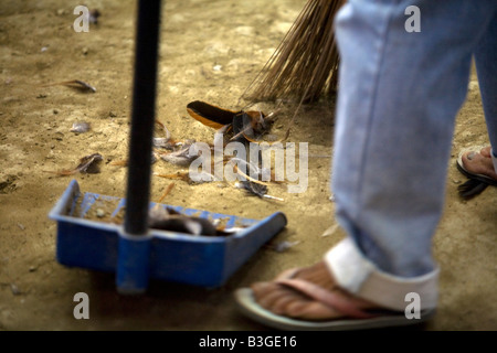 A Filipino sweeps up feathers between cockfighting bouts at a cockhouse near Mansalay, Oriental Mindoro, Philippines. - Stock Image