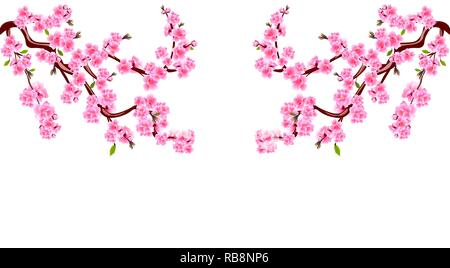 Sakura. Branches with purple flowers. Cherry blossoms is located on both sides. Inscription. Isolated on white background. Illustration - Stock Image