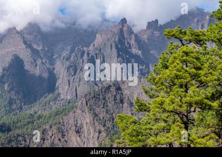 Geological landscape of La Palma Island. Canary Pine Tree (Pinus canariensis) grows at La Cumbrecita in the Caldera de Taburiente - Stock Image