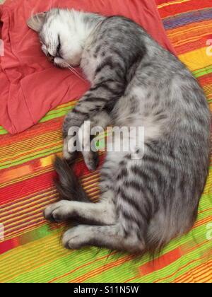 Sleeping cat - Stock Image