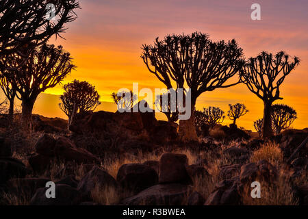 Africa, Namibia, Keetmanshoop, sunset at the Quiver tree Forest at the Quiver tree Forest Rest Camp - Stock Image