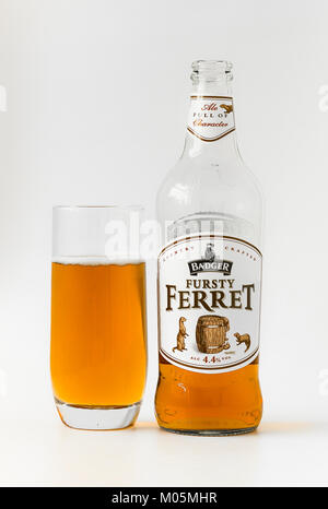 Fursty Ferret real ale brewed by Badger in England UK bottled and served in a glass - Stock Image