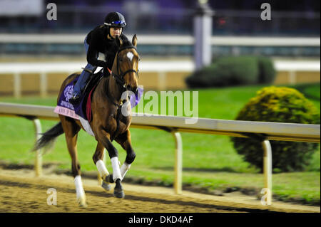 Nov. 3, 2011 - Louisville, Kentucky, U.S. - November 3, 2011: Ann of the Dance, trained by Marty Wolfson and to be ridden by Diego Sanchez exercises in preparation for the 2011 Breeders' Cup at Churchill Downs on November 3, 2011. (Credit Image: © Jamey Price/Eclipse/ZUMAPRESS.com) - Stock Image