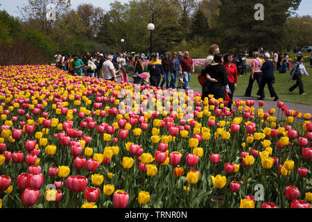 Tulip flower beds and tourists at spring time along Queen Elizabeth Drive, Ottawa, Ontario, Canada - Stock Image