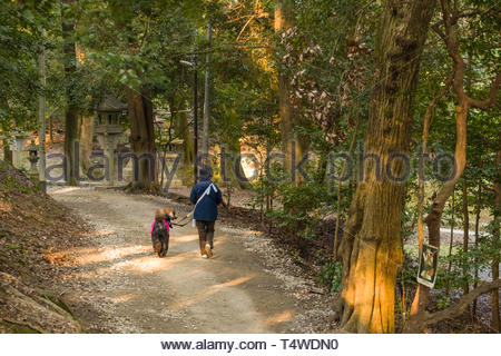 Woman walking her pet dog, a Standard Poodle on the grounds of Fushimi Inari Taisha Shinto shrine, Fukakusa Yabunouchicho, Fushimi Ward, Kyoto, Honsh - Stock Image