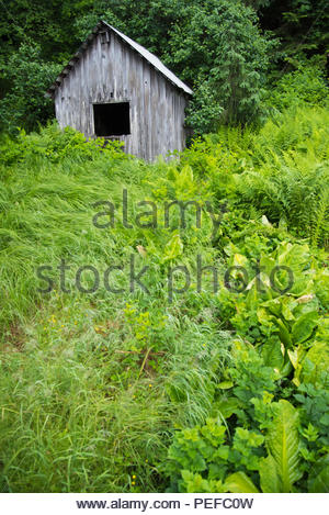 An old out building, Petersburg, Inside Passage. - Stock Image