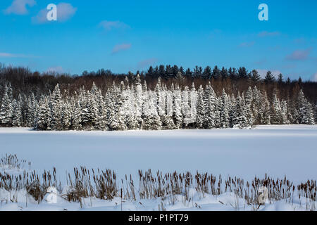 A field and trees covered with snow under a blue sky; Quebec, Canada - Stock Image