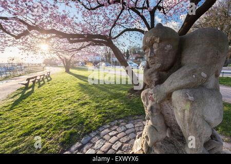 Cherry blossoms in park, Hamburg, Germany, Europe - Stock Image