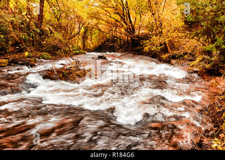 rapids of the stream in the forest during the autumn season - Stock Image
