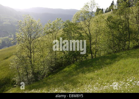 Hayfield in  Bernese Highlands mountains in beautiful evening light in Hiking area above Interlaken Habkern - Stock Image