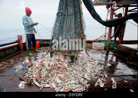 Fish being brought aboard for sorted and stowed away on deck, Brunei - Stock Image