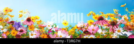 Spring flowers against blue sky - Stock Image