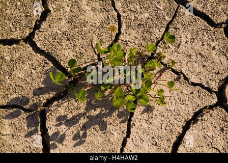 Arid soil - Stock Image