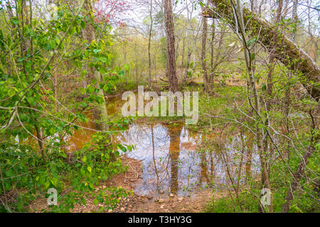 Flooded Wetlands in Forest - Stock Image