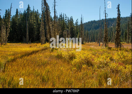 An unnamed swamp immediately below the outlet of Hideaway Lake in Oregon's Mt. Hood National Forest, in fall. - Stock Image