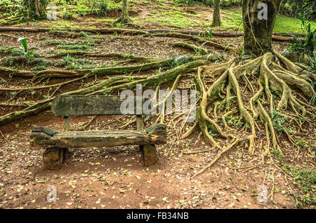 wooden bench and roots - Stock Image