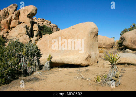 Boulders and Joshua Trees in Joshua Tree National Park, California. - Stock Image