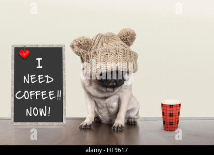 cute pug puppy dog with bad morning mood, sitting next to blackboard sign with text I need coffee now, copy space - Stock Image