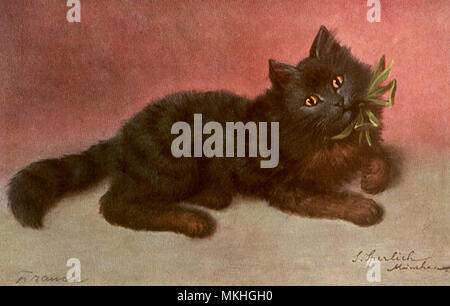 Black Cat with Bow - Stock Image