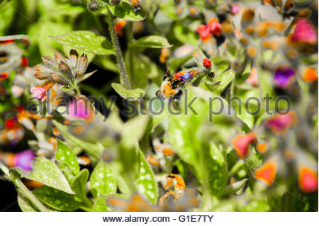 Ince Blundell, England UK, Friday 13th May 2016. UK Weather, Spring has Sprung, finally with the warm weather, plants - Stock Image
