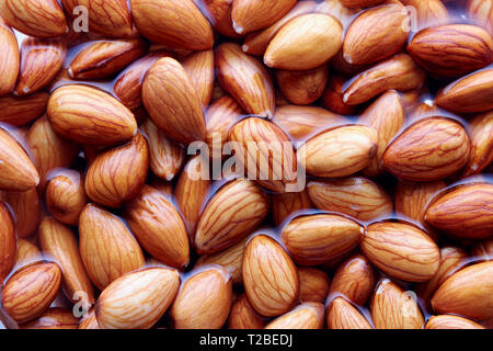 Soaking almonds in water. Almonds being softened in water to create almond milk. - Stock Image