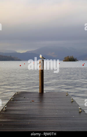 Lone seagull sitting on a post, Bowness on Windermere, Lake District, Cumbria, England - Stock Image