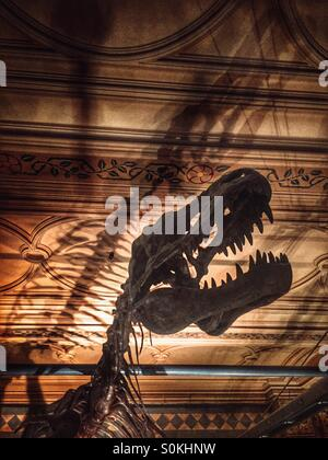 Dinosaur, at the Natural History Museum in London - Stock Image