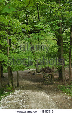 Weald and Downland Open Air Museum Singleton Near Chichester West Sussex - Stock Image