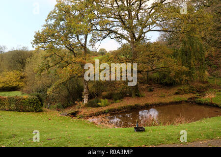 Colourful autumn leaves on oak trees by a garden pond in late October in Carmarthenshire countryside in rural Wales UK  KATHY DEWITT - Stock Image