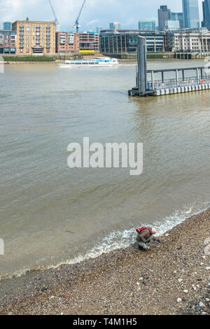 A man mudlarking at low tide on the riverbank of the River Thames in London. - Stock Image