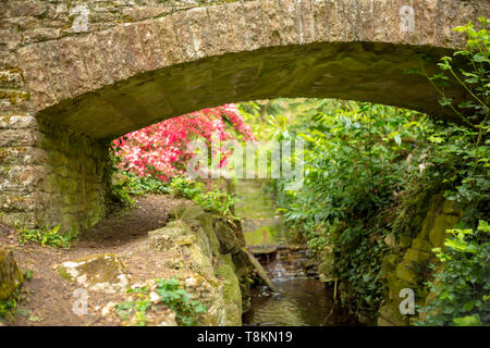 Selective focus colour photograph focused on old stone bridge with pink azaelea and stream in background. Branksome chine gardens, Poole, Dorset, Engl - Stock Image