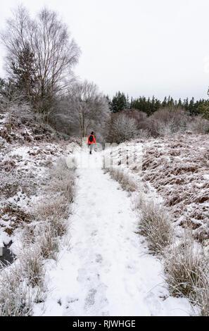 A woman in orange jacket walking in a snowy forest in Snowdonia, Wales, UK - Stock Image