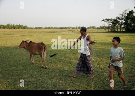 BANGLADESH Father and son of the Garo tribal minority taking their cow to pasture, Haluaghat, Mymensingh region photo by Sean Sprague - Stock Image