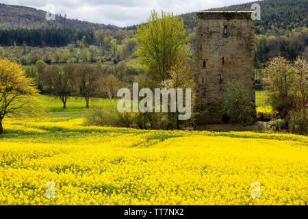 Medieval irish Tower House on rapeseed field with hills covered with forest in County Waterford,Ireland. - Stock Image