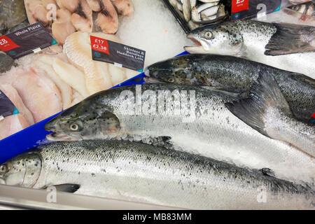 Fresh wet fish on fish counter - Stock Image