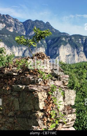 Little tree - Italian Alps.Trentino, Italy - Stock Image