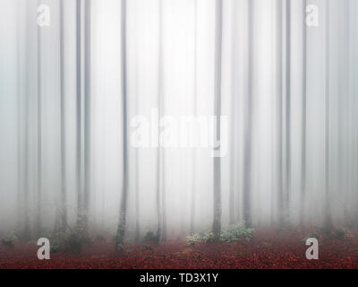 fantasy bright forest with fog and blur - Stock Image