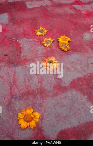Orange flowers on the ground with Holi colors during Holi celebration, Vrindavan , India - Stock Image